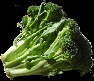 1181px-Broccoli_DSC00862